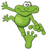 Jumping cartoon frog  on white Stock Photo