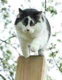 Jumping cat Stock Photography