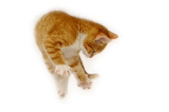 Jumping cat Royalty Free Stock Images