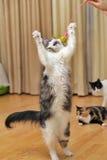 jumping  cat Royalty Free Stock Photos