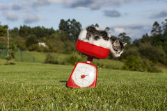 Jumping cat. A horizontal view of a little cat jumping from a scales at a garden Stock Photography