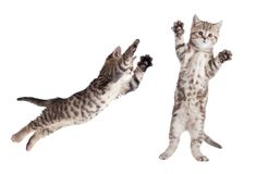 Jumping cat set isolated. On white Stock Image