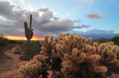 Arizona cactus sunset Royalty Free Stock Image