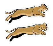 Jumping Cougar Stock Photography