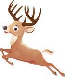 Jumping deer Royalty Free Stock Photos