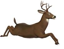 Jumping deer Stock Photos