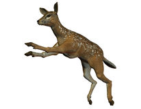 Jumping deer Royalty Free Stock Photography