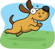 Jumping Dog. A smiling dog jumping in a field Royalty Free Stock Photo