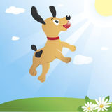 Jumping dog. Young dog is jumping high to catch a ball. Bright yellow sun lights up an emerald green meadow and a brilliant blue sky Stock Photos
