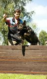 Jumping dog. Jumping black old dog over the barrier royalty free stock photography