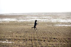 Jumping dog having fun in winter Stock Images