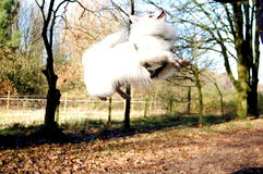 Jumping dog. In tge forest stock photography