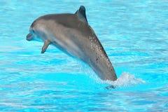 Jumping dolfijn Royalty-vrije Stock Afbeelding