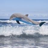 Jumping dolfijn Royalty-vrije Stock Foto