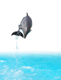 Jumping Dolphin. Dolphin jumping out of the water isolated on white background with clipping path stock photography