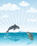Jumping dolphin Stock Image