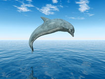 Jumping Dolphin. Dolphins are marine mammals that are closely related to whales and porpoises Royalty Free Stock Photo