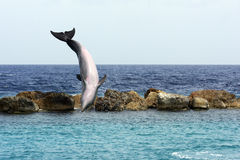 Jumping dolphin Royalty Free Stock Photos