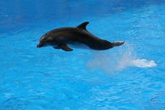 Jumping dolphin. Royalty Free Stock Photos
