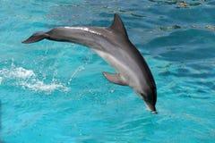 Free Jumping Dolphin Stock Photos - 4830193