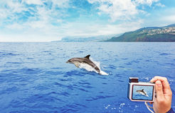 Jumping dolphin. Picture taking of a jumping dolphin at a watching tour royalty free stock photography