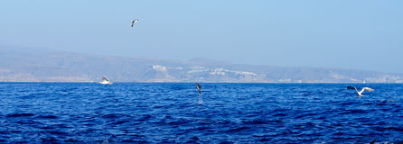 Jumping dolphin and sea gulls Stock Photography
