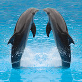 Jumping dolphin twins. Dolphin twins are jumping in the water Stock Photo