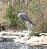 The jumping dolphin royalty free stock photography