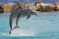 Jumping dolphins Royalty Free Stock Photo
