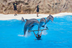 Jumping dolphins at dolphin show Royalty Free Stock Images