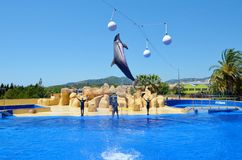 Jumping dolphins at Dolphin Show in a Zoo. BARCELONA,SPAIN/JUNE 15,2018:Jumping dolphins at Dolphin Show in a Zoo royalty free stock photography