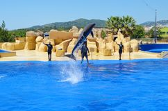 Jumping dolphins at Dolphin Show in a Zoo. BARCELONA,SPAIN/JUNE 15,2018:Jumping dolphins at Dolphin Show in a Zoo stock image