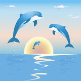 Jumping dolphins in front of a sunset over sea. Three beautiful dolphins are jumping high out of the deep blue sea on a sunset over the horizon line Royalty Free Stock Photography