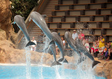 Jumping dolphins. Dolphins jumping high during show in Loro Parque in Tenerife, Spain stock photos