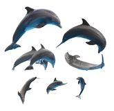 Jumping dolphins on white stock image