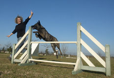 Jumping Dutch Shepherd Dog. In a training of agility Royalty Free Stock Photos