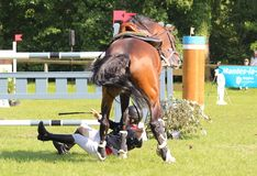 Jumping fall. Jumping consists in linking an obstacle course without fault. The tests are intended to demonstrate the horse's power, its address, its speed and Stock Photos