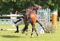 Jumping fall. Jumping consists in linking an obstacle course without fault. The tests are intended to demonstrate the horse's power, its address, its speed and Stock Images