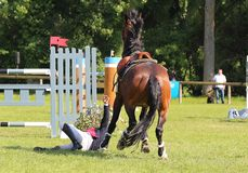 Jumping fall. Jumping consists in linking an obstacle course without fault. The tests are intended to demonstrate the horse's power, its address, its speed and Royalty Free Stock Images