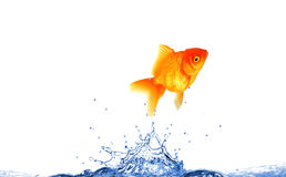 Jumping fish Stock Photo