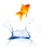 Jumping fish Royalty Free Stock Photos