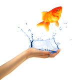 Jumping fish Royalty Free Stock Photography