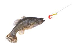 Jumping fish catching a bait. With hook royalty free stock photo