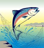 Jumping Fish Salmon - Illustration Royalty Free Stock Images