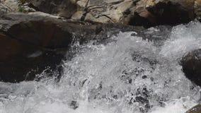 Jumping fish stock video