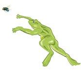 Jumping frog Royalty Free Stock Photos