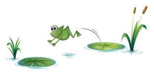 A jumping frog. Illustration of a jumping frog on a white background Royalty Free Stock Photography