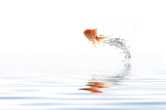 Jumping golden fish Stock Image