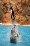 Jumping high with dolphins. Woman being lifted high in the air by two dolphins during show in Loro Parque in Tenerife, Spain Stock Photo