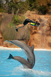 Jumping high with dolphins. Woman being lifted high in the air by two dolphins during show in Loro Parque in Tenerife, Spain Stock Images